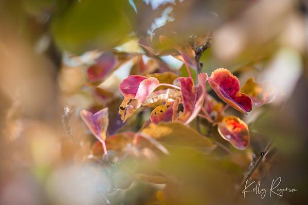 Leaves in Autumn Sunshine