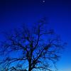 """""""Moon Tree"""""""