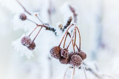 Berry Frozen