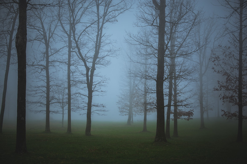 """""""Fog In The Forest"""""""