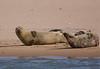 Seals. John Chapman.