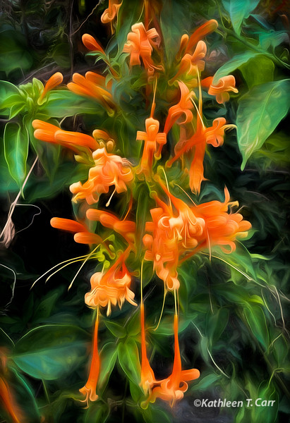 Huapala Flowers