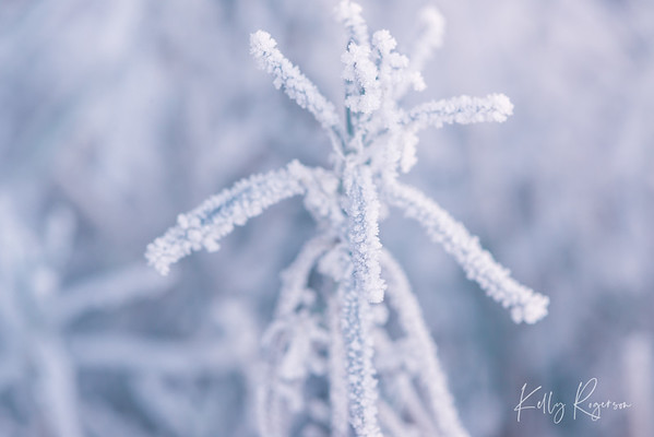 Winter settling in.