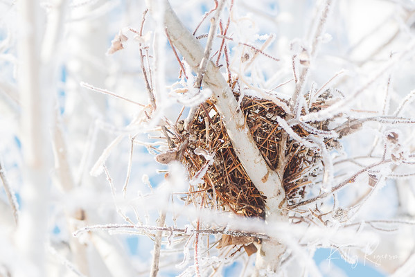 Someone's little nest of a home, survived the winter months.