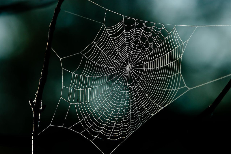 Spider web, Roselle Park, Michigan