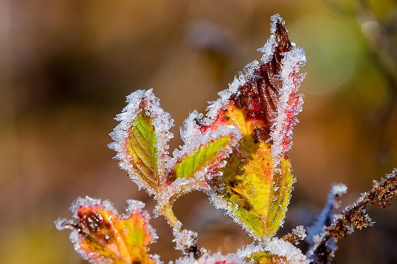 Morning Frost, Huff Nature Preserve, Michigan