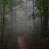 """""""Foggy Path"""""""