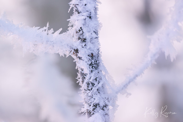 Purple Frost & Ice