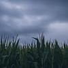 """Farm Sunset"""