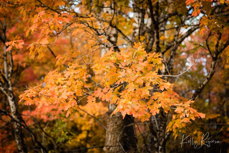 Beautiful Branch