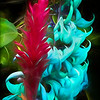 Jade Vine and Red Ginger