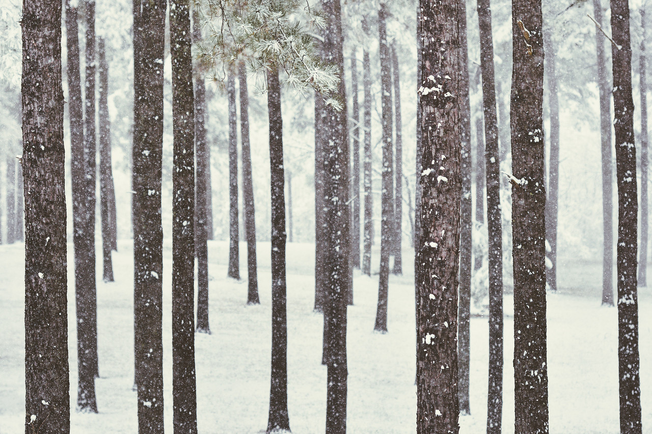 """""""In The Pines"""""""
