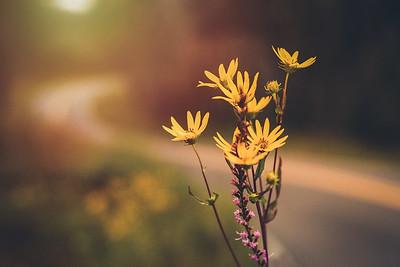 """""""Wildflower Sunset"""""""