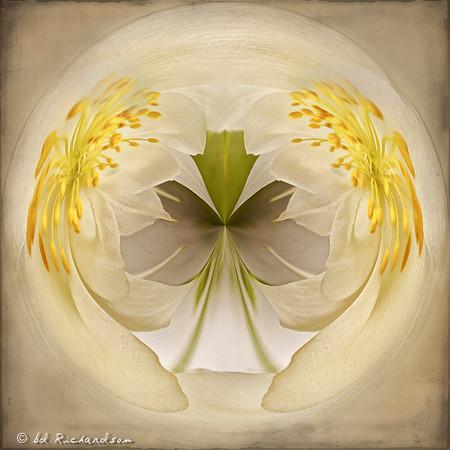 Waltzing Wildflowers