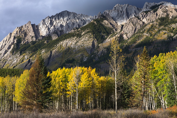 Sawtooth Mountains and Aspen