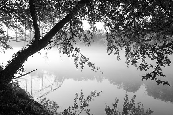 Silhouette of tree and morning reflection in the mist on the  Chattahoochee River, Atlanta.