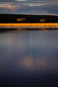 Bosque del Apache Wildlife Refuge