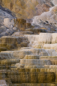 Morning at Palette Spring at Mammoth Hot Springs