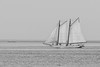 Delaware Bay Oyster Schooner in B&W