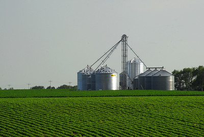 Grain Bins Surrounded by Soy Beans