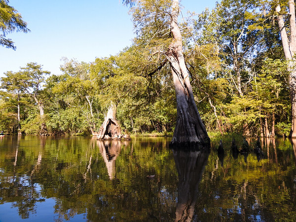 Madonna tree and reflections - Neches River 2019
