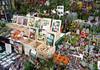 Bloemenmarkt (Flowers Market) - succulents to tulips - Amsterdam