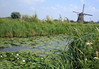 Across the blooming water lilies - to an mid 18th century windmill - Kinderdijk - South Holland province