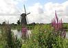 Kinderdijk - beyond the florescence along the catch water basin for the polder - to one of the mid 18th century windmills - South Holland province