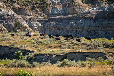 Landscape-Badlands-Buffalo-herd-Teddy-Roosevelt-Dakota-(c)-Bolio-Photography