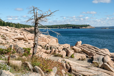 Rocky Shoreline of Acadia National Park in Maine.