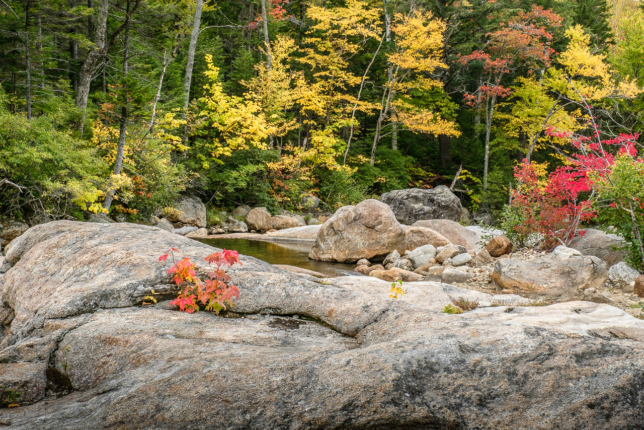 Fall Foliage Landscape of New Hampshire Route 16 North of North Conway