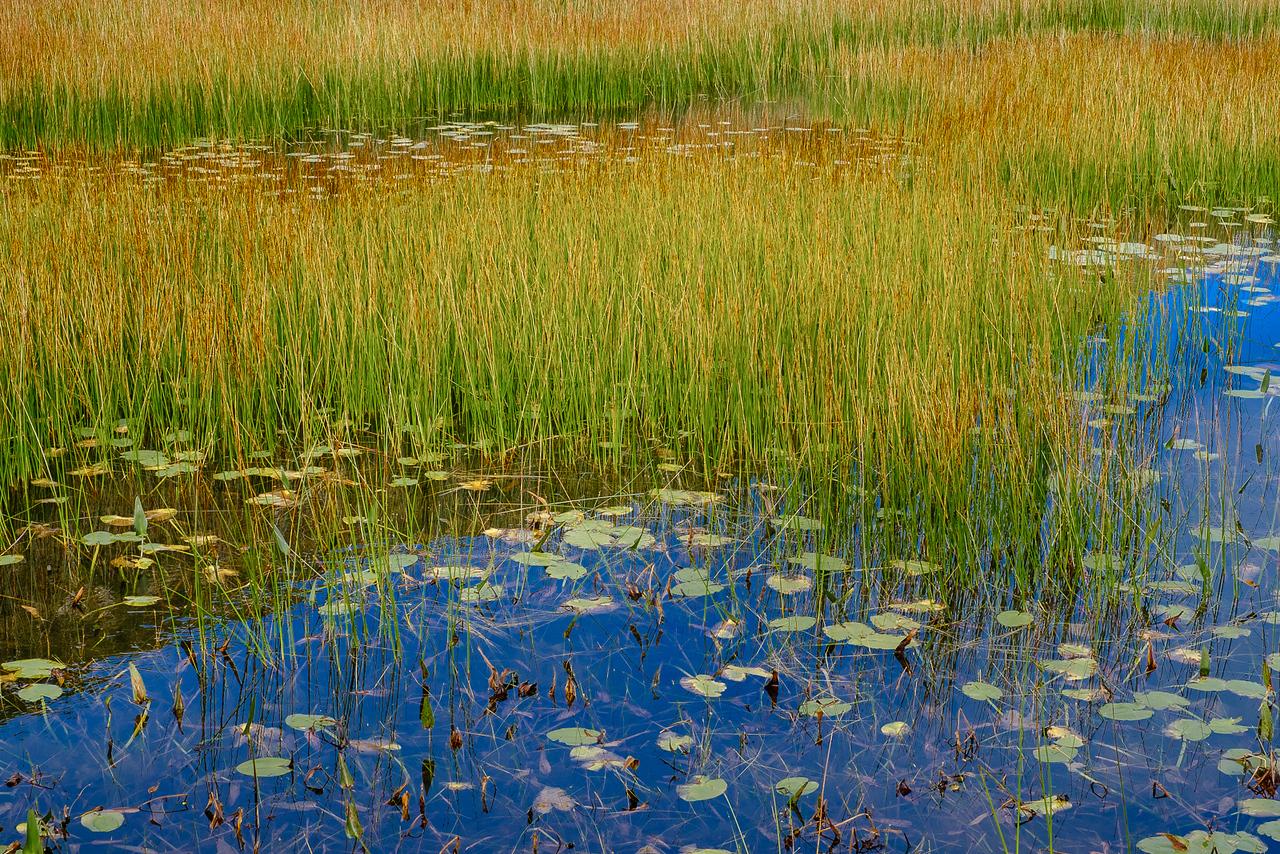 Grass, Reeds and Still Blue Water