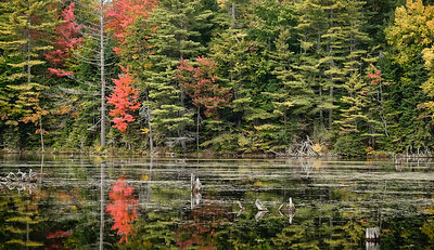 Fall Foliage and Still Lake