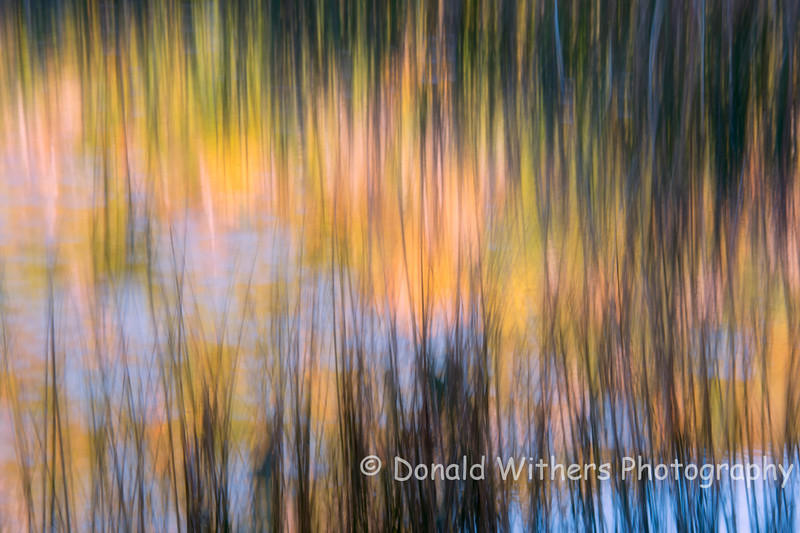 Autumn in Motion