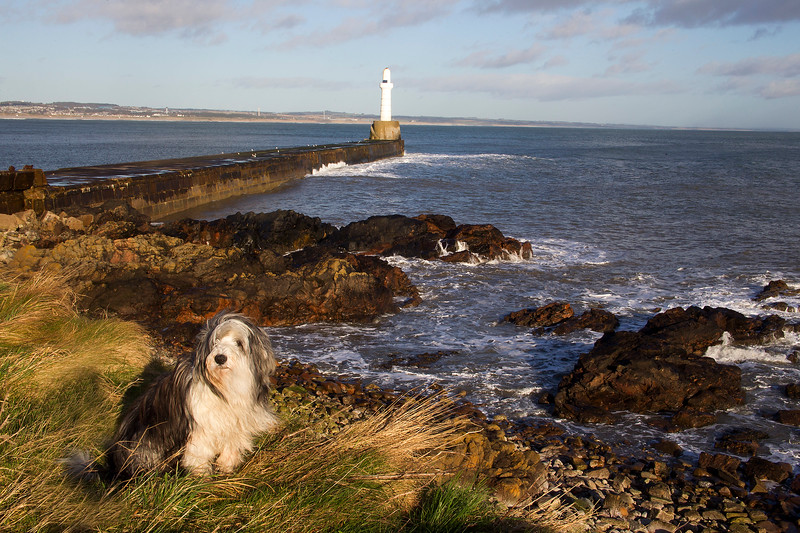 Buddy at the Bay of Nigg. Aberdeen.
