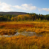 Autumn Colours with the Mountain of Morven behind.