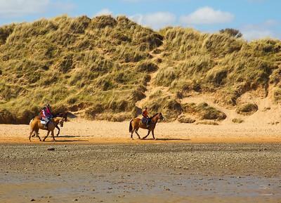 Horses at Newburgh. Aberdeenshire.