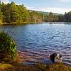Buddy at Aboyne Loch. Aberdeenshire.