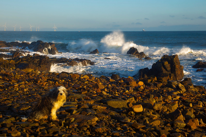 Buddy at the Sea Shore Aberdeen.