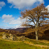 Old Ruin near Braemar. Scotland