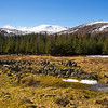 The Mountain of lochnagar in the back ground. Scotland.