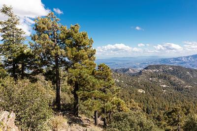 Scenic Mt. Lemmon