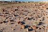 Petrified Shards