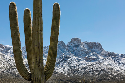 Snow and Saguaro