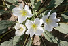 Spring in Anza Borrego
