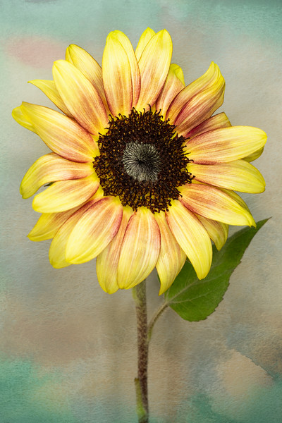 Summer Sunflower Lite