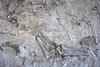 Dinosaur Quarry Exhibit