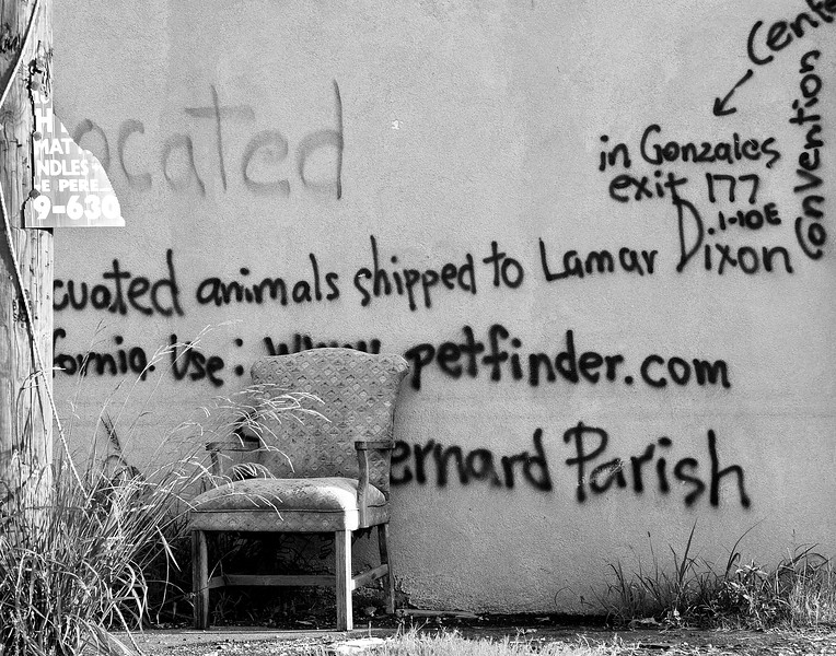 Note about Evacuated Animals after Katrina New Orleans