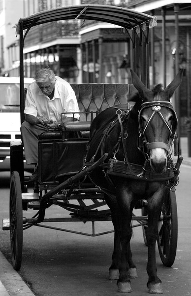 horse carriage rides Bourbon Street, New Orleans French Quarters