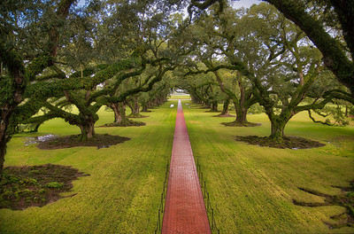 Oak Alley BPC - -20